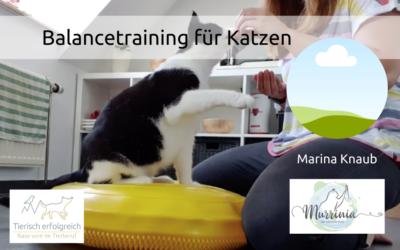 Balancetraining für Katzen – ein Interview mit Marina Knaub
