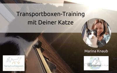 Transportboxen-Training mit Deiner Katze