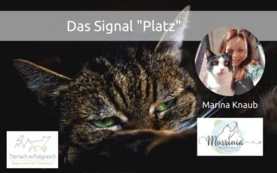 """Training mit Katzen – das Signal """"Platz"""""""