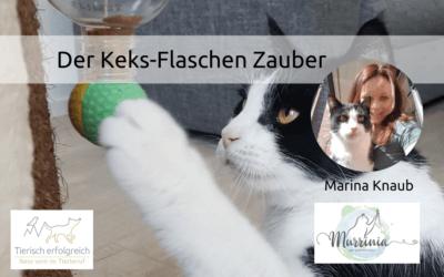 Katzen beschäftigen: Der Keks-Flaschen-Zauber