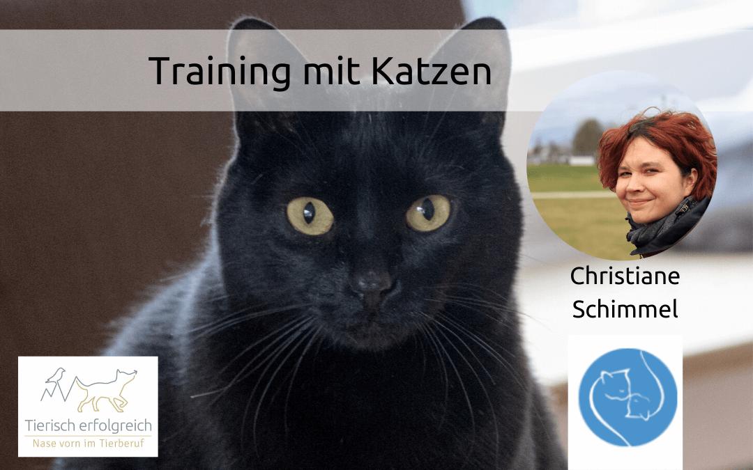 Katzen und Training