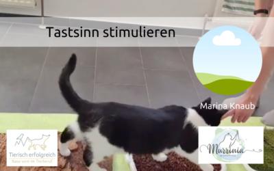 Tastsinn der Katze stimulieren – ein Interview mit Marina Knaub
